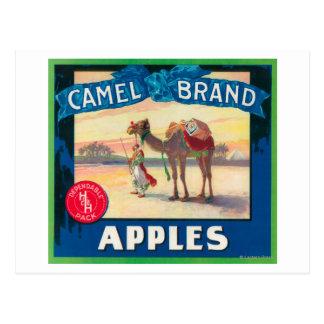 Camel Apple Label - Washington State Postcard