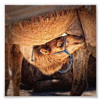 Camel Baby Art Photo