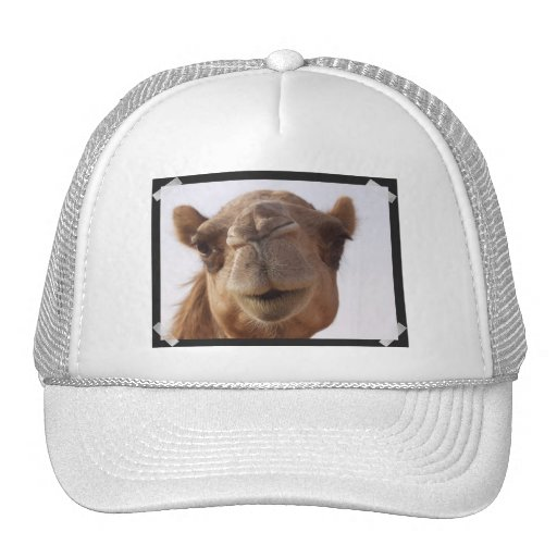 Camel Baseball Hat