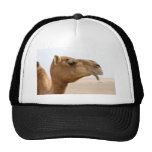Camel face hats