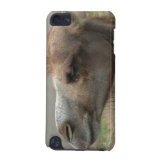 Camel Head iTouch Case iPod Touch 5G Cover