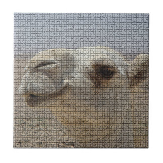 Camel Head Tile