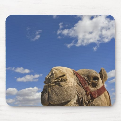 Camel in front of the pyramids of Giza, Egypt, Mousepads