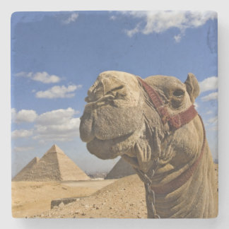Camel in front of the pyramids of Giza, Egypt, Stone Beverage Coaster