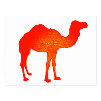 Camel in Red Postcard