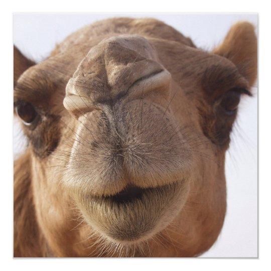 Camel Invitation
