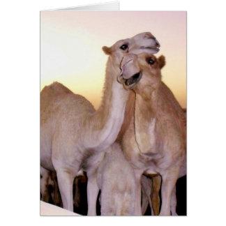Camel Love Card