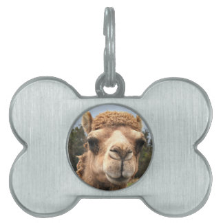 Camel Pet ID Tag