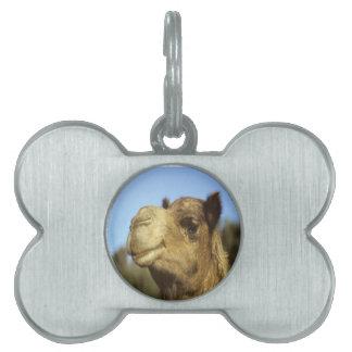 Camel Pet Name Tags