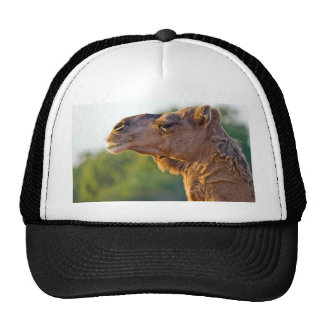 Camel Portrait Mesh Hat