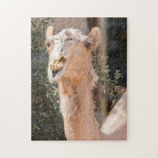 Camel staring while chewing jigsaw puzzle