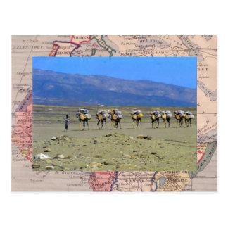 Camel train crossing the Sahara desert Postcard