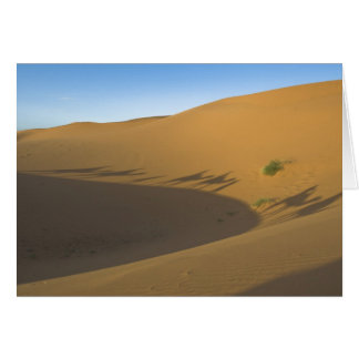 Camel trek card
