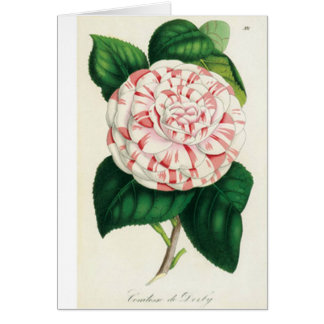 Camellia - Card De Felicitación