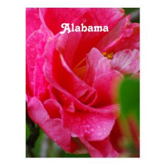 Camellia in Alabama Postcard