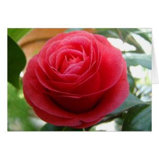 Camellia Notecard