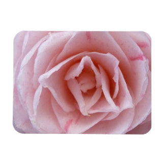 Camellia - Pink Rectangular Photo Magnet