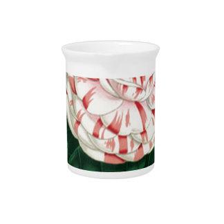 Camellia Pitcher