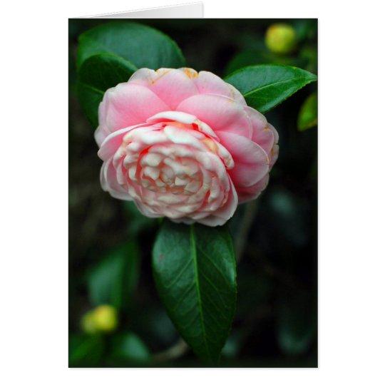 Camellia Valentine Card