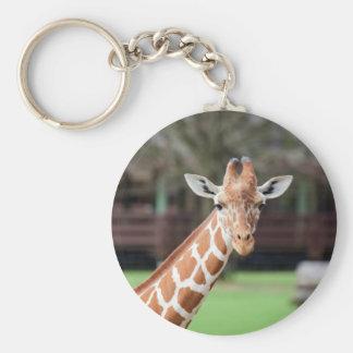 Camelopard (giraffe) basic round button key ring