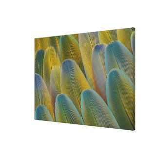 Camelot Macaw Feather Abstract Canvas Print