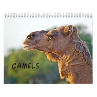 CAMELS  2013 Wall Calendar