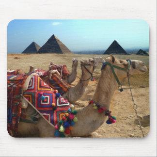 Camels at Giza Cairo Mouse Pad