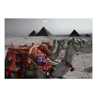 Camels at the Pyramids Poster