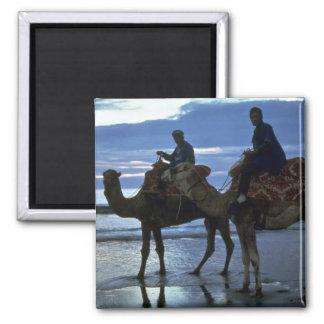 Camels, Morocco Magnet