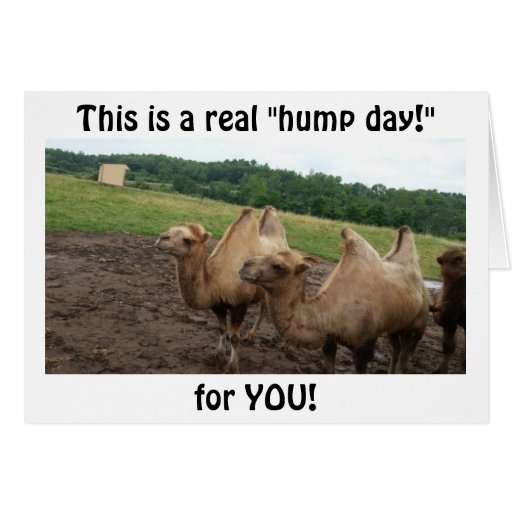 """CAMELS SAY """"HUMP DAY FOR YOU AT 40"""" GREETING CARDS"""