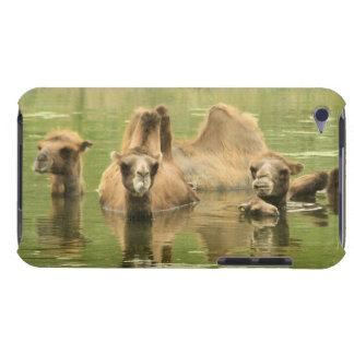 Camels Yum iPod Case-Mate Case