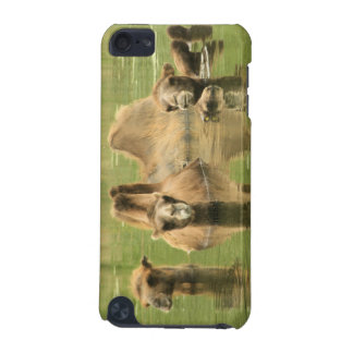 Camels Yum iPod Touch (5th Generation) Cases