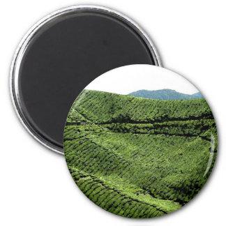 Cameron Highland Tea Plantation, Malaysia Magnet