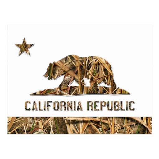 Camo California Bear Postcards