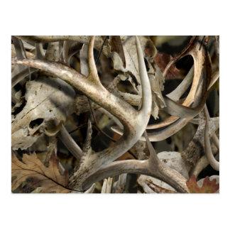 Camo Deer Skulls Postcard