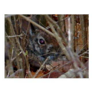 Camo Rabbit Postcard