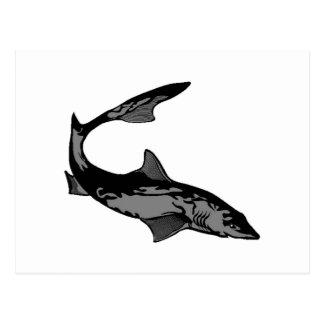 Camo Shark Postcard