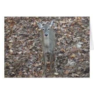 Camouflage Deer in fall leaves Card
