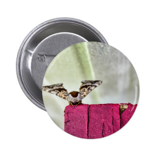 Camouflage moth button