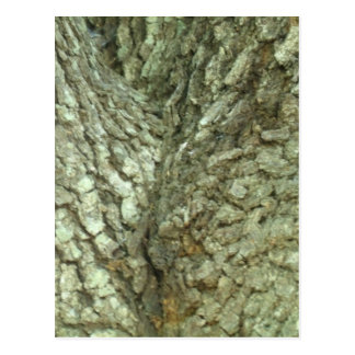 Camouflage Trees Tree Fork Bark Camo Nature Photo Post Cards