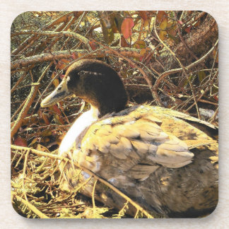 Camouflaged Duck Drink Coasters