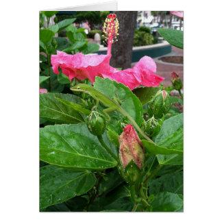 Camouflaged Lizard Below Pink Hibiscus Photograph Card