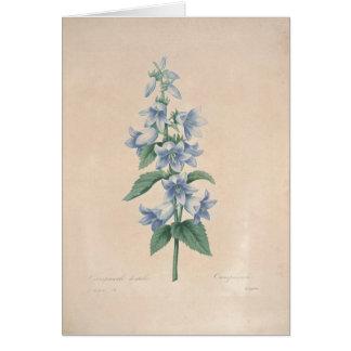 Campanula by Redoute Botanical Sympathy Card