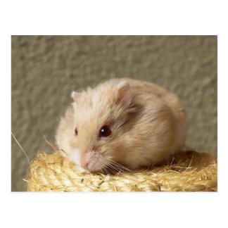 Campbells Dwarf Russian Hamster, Argente Postcard