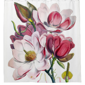 Campbell's Magnolia Shower Curtain