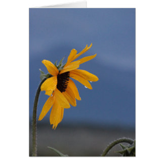 Can Sunflowers Cry? Card