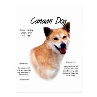 Canaan Dog History Design Postcard