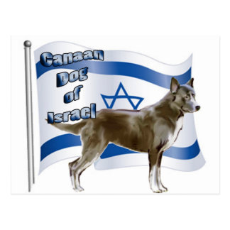 Canaan dog of Israel Postcard