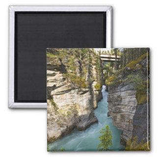 Canada, Alberta, Jasper National Park, Athabasca 2 Square Magnet