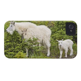 Canada, Alberta, Jasper National Park, Mountain 2 Case-Mate iPhone 4 Cases